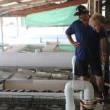 Harvesting Oysters - Cygnet Bay Pearl Farm