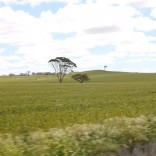 West Australian Wheatbelt