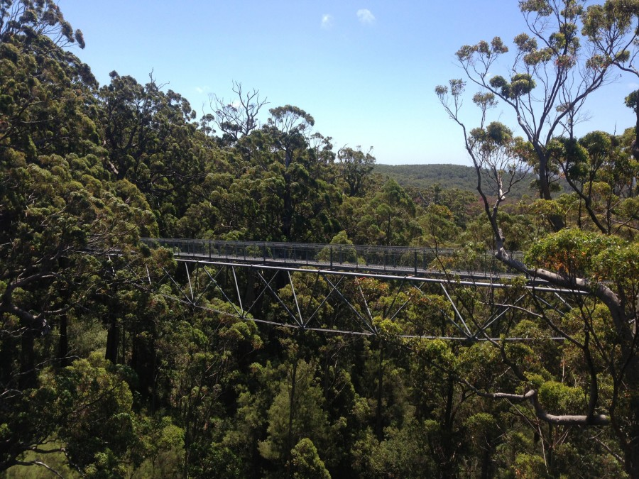 Part of the Tree Top Walk